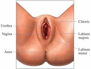 4 cosas que no sabias acerca del clítoris